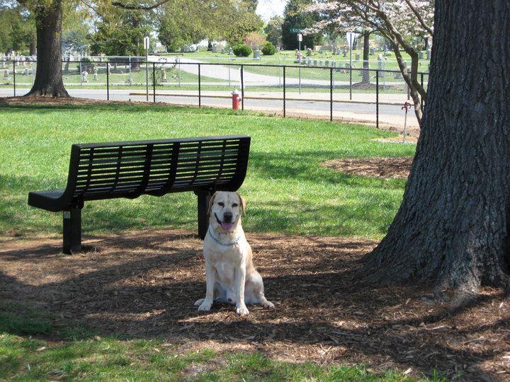 Dog Parks In Burlington Nc