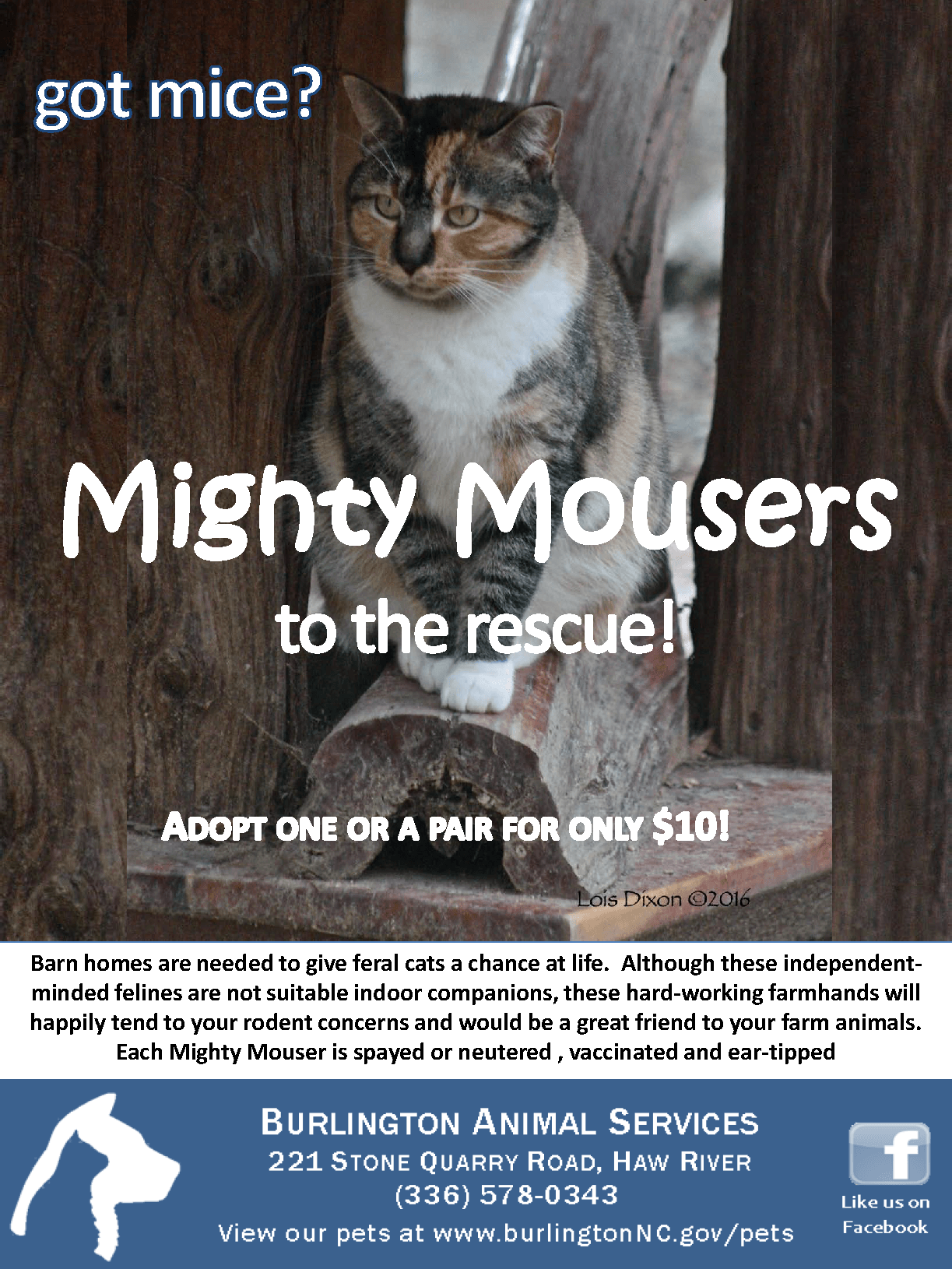Mighty Mousers