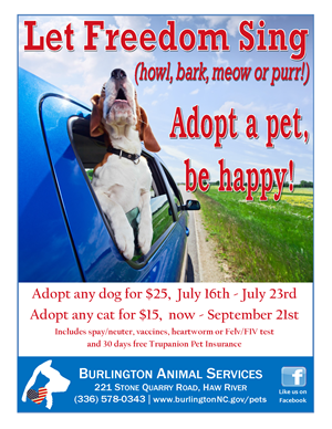 July 2016 adoption special