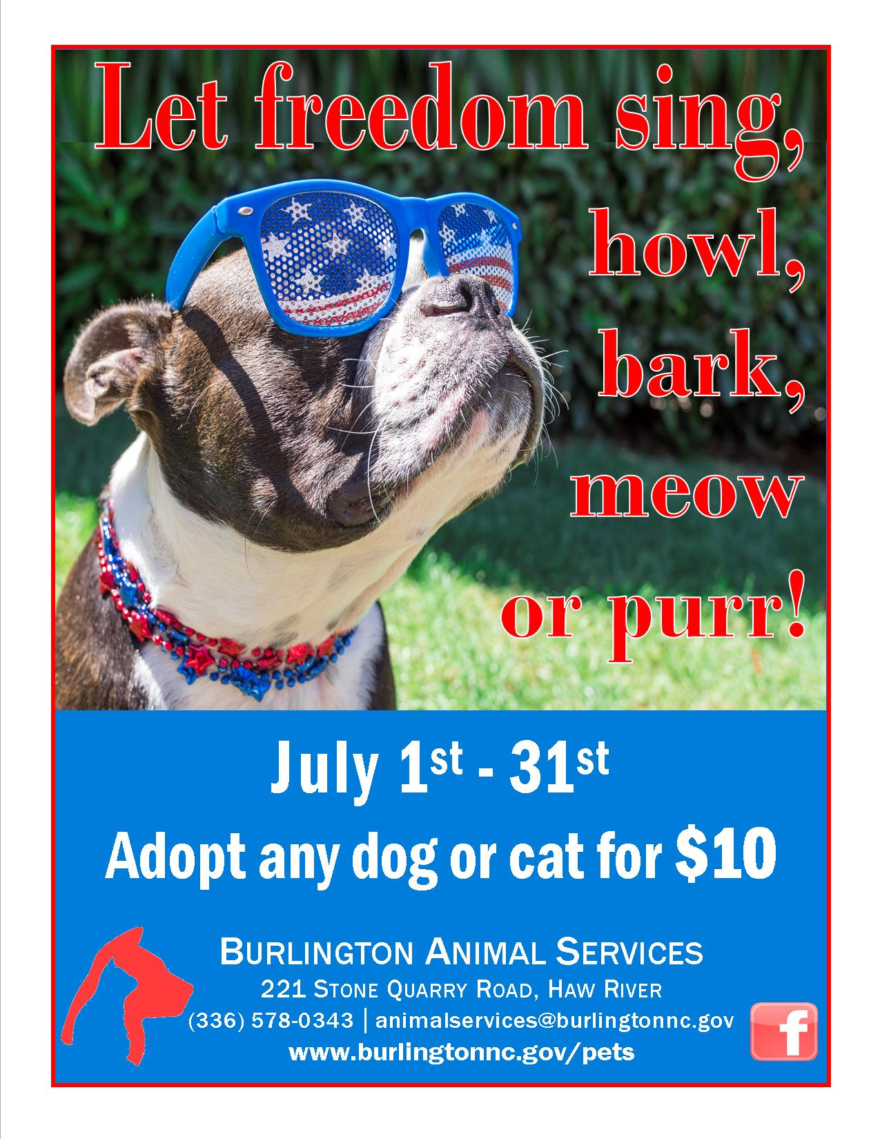 July 2017 adoption special