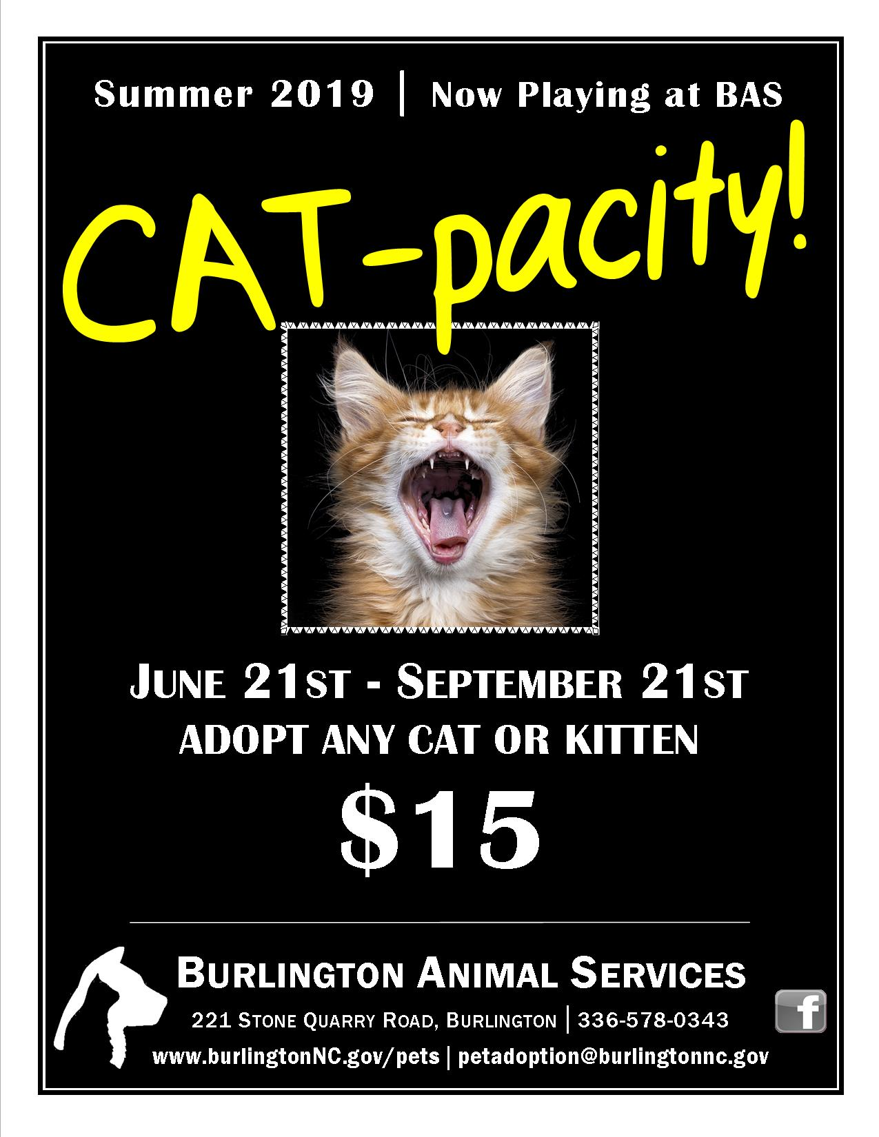 Summer of Cat-pacity 2019