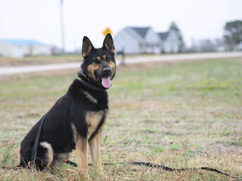 k9 canine
