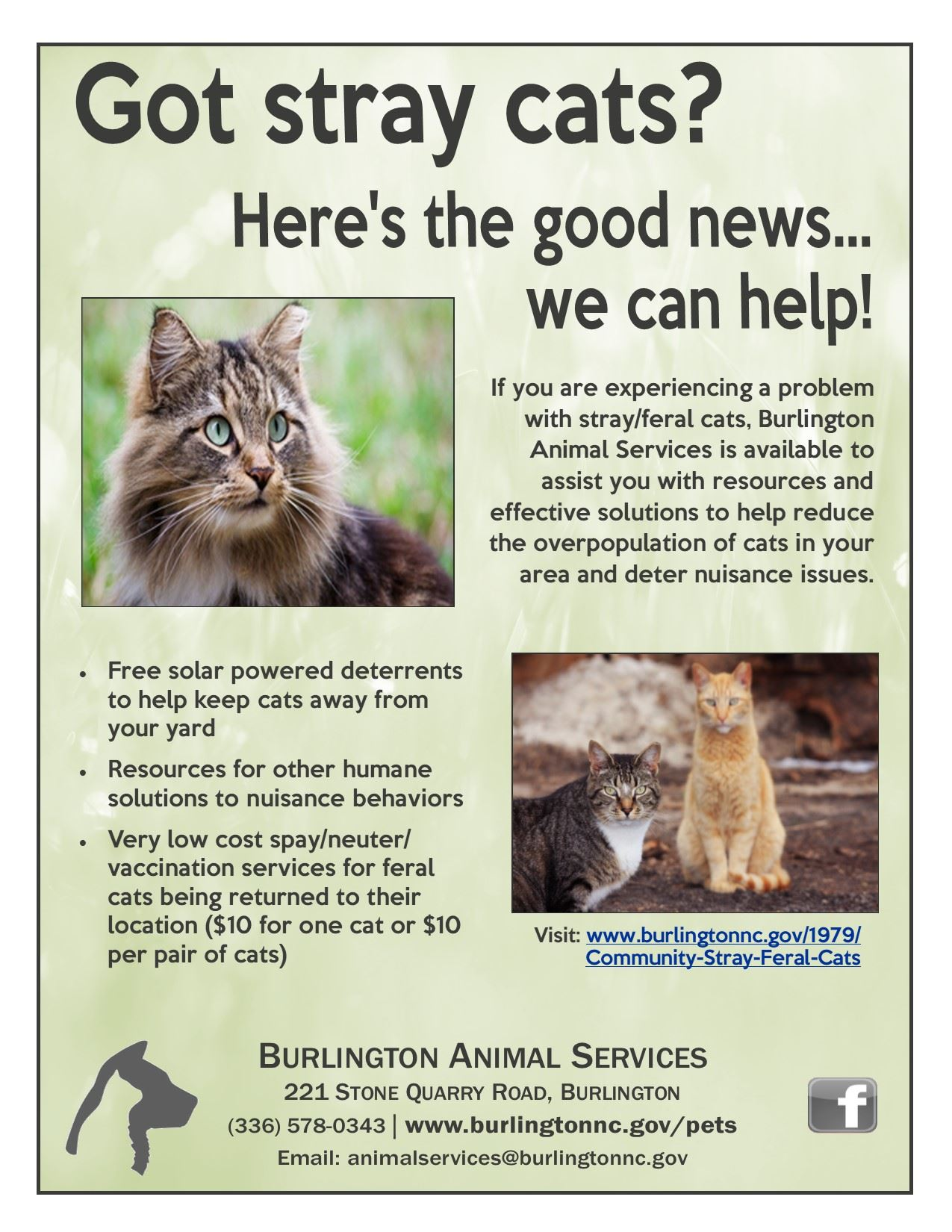 Community Cat Flier no BF logo