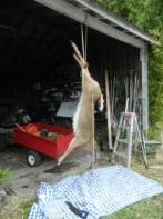 deer hide.jpg